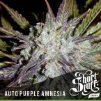 Auto purple amnesia feminised