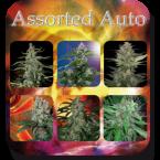 Buddha Seeds Assorted Auto Feminised Mix