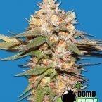 Bomb Seeds Big Bomb Auto