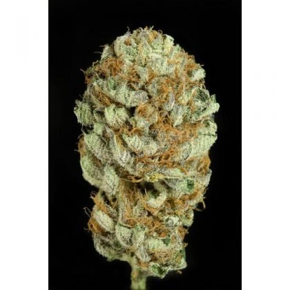 Dinafem Blue Kush Feminised Seeds