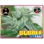 Big Buddha Seeds Bubble Cheese Feminised Seeds