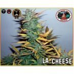 Big Buddha Seeds L.A. Cheese Feminised Seeds