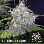 shortstuff seeds Auto Bud Cannon feminised