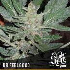 shortstuff seeds Dr.feelgood feminised
