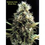 African Buzz Regular Seeds