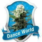 Royal Queen Seeds Dance World Feminised Seeds