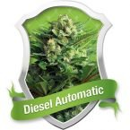 Royal Queen Seeds Diesel Automatic Feminised Seeds