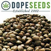 Dope-Seeds