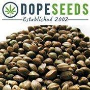 Amnesia Female seeds