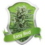 Royal Queen Seeds Easy Bud Automatic Feminised Seeds
