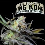 Big Buddha Seeds King Kong feminised seeds
