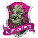 Royal Queen Seeds Northern Light Feminised Seeds
