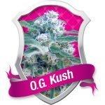O.G. Kush Feminised Seeds