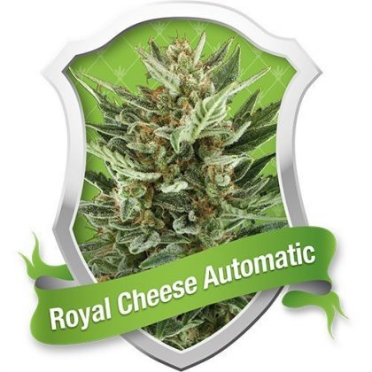 Royal Queen Seeds Royal Cheese Automatic Feminised Seeds