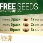 royal queen seeds free gift