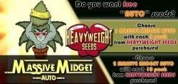 free heavyweight seeds