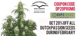 dutch passion promo
