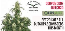20% discount dutch passion seeds
