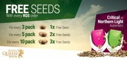 royal queen seeds free seeds promo