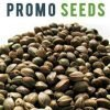 Promotional free seeds