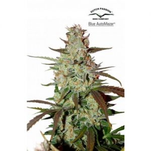 Dutch Passion Blue AutoMazar Feminised Seeds