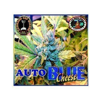 Big Buddha Seeds Big Buddha Blue Cheese AUTO Feminised Seeds