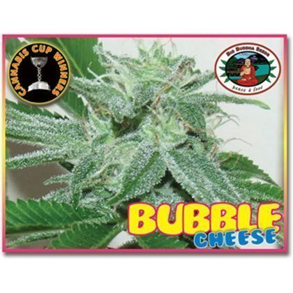 Big Buddha Seeds Bubble Cheese Feminised Seeds
