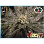 Big Buddha Seeds Cheesus Feminised Seeds