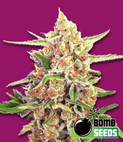 Bomb Seeds Cherry Bomb