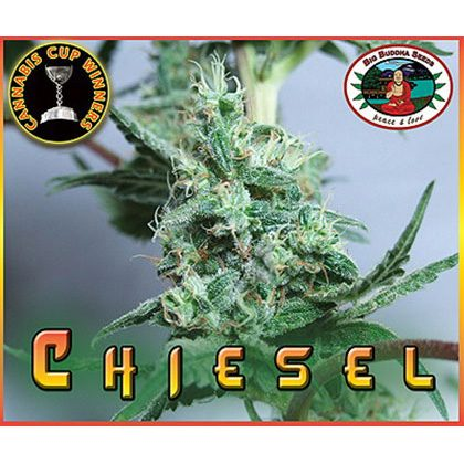 Big Buddha Seeds Chiesel Feminised Seeds