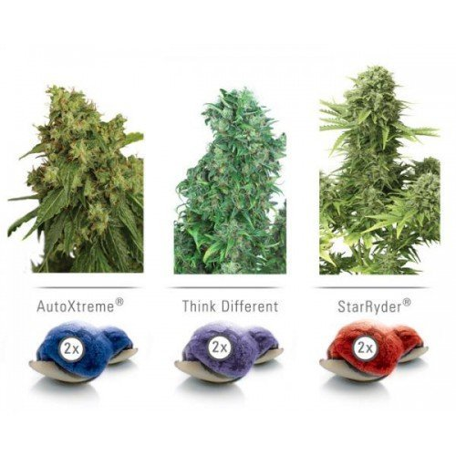Dutch Passion Colour Mix 7 ' Autoflowering Feminised Seeds