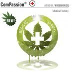 Dutch Passion ComPassion Feminised Seeds