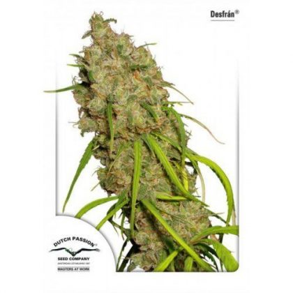 Dutch Passion Desfran Feminised Seeds