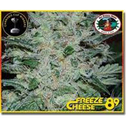 Big Buddha Seeds Freeze Cheese '89 Feminised Seeds