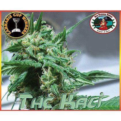 Big Buddha Seeds The Kali Feminised Seeds