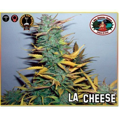 Big Buddha Seeds L.A. Cheese Feminised Seeds