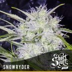 shortstuff seeds Snowryder feminised