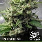 shortstuff seeds Auto Spanish Diesel feminised