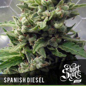 shortstuff seeds Auto Spanish Diesel feminised