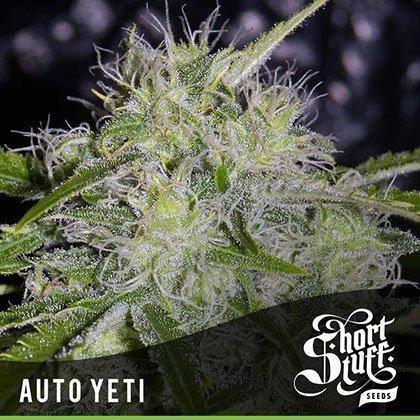 shortstuff seeds Auto Yeti feminised
