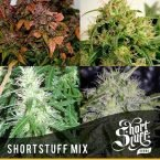 shortstuff seeds ShortStuff mix feminised