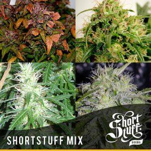 shortstuff seeds ShortStuff mix feminised