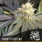 shortstuff seeds Short stuff #1 regular