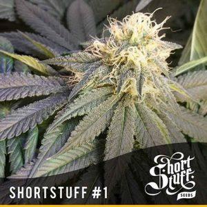 shortstuff seeds Short stuff #1 regular