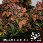 shortstuff seeds Himalaya blue diesel feminised