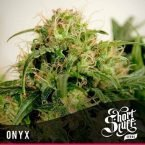 shortstuff seeds Onyx feminised