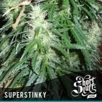 shortstuff seeds Super Stinky feminised