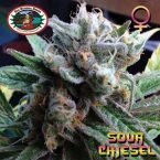 Big Buddha Seeds Sour Chiesel Feminised Seeds