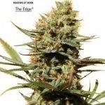 The Edge Feminised Seeds