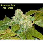 Ata Tundra Regular Seeds